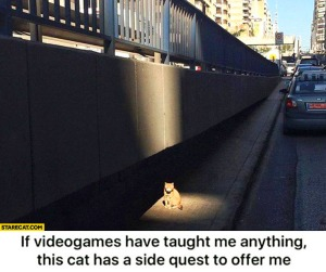 if-videogames-have-tought-me-anything-this-cat-has-a-side-quest-to-offer-me